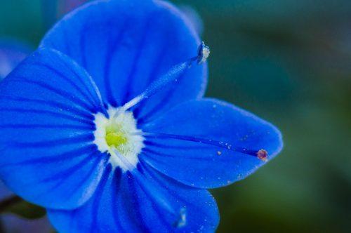 Le coeur des fleurs