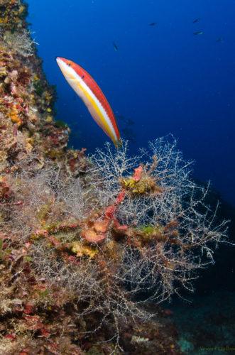 L'ile d'Elbe en mode Cousteau