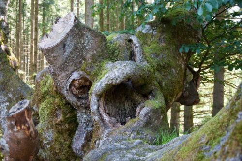 arbres torturés