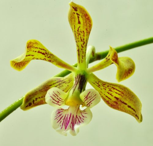 une petite orchidée